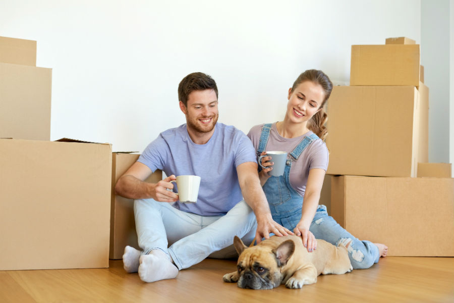 Moving with Pets 6 Easy Tips to Help Ease the Stress